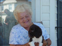 English Springer Spaniels puppies in ohio